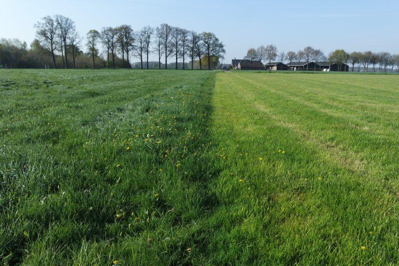 De gras situatie in de Gelderse Achterhoek , 2 mei 2016