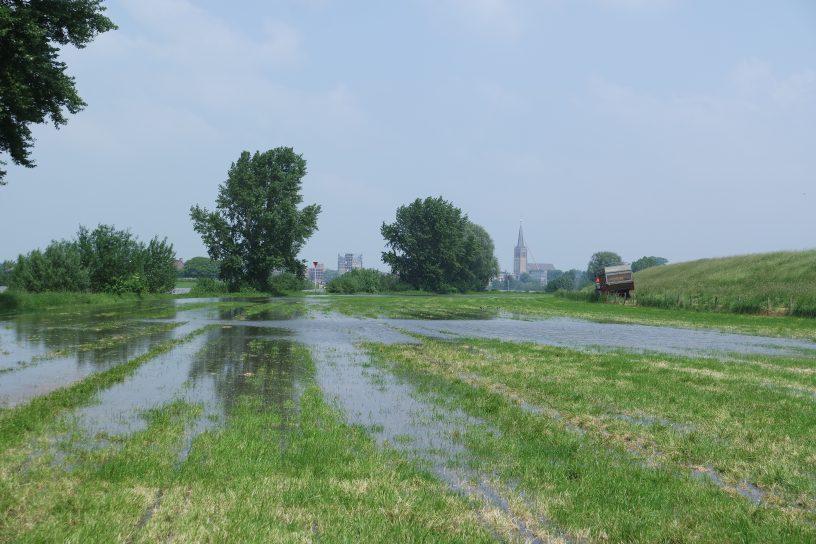Hoogwater in de uiterwaarden bij Doesburg (Gld.) 2 juni 2016